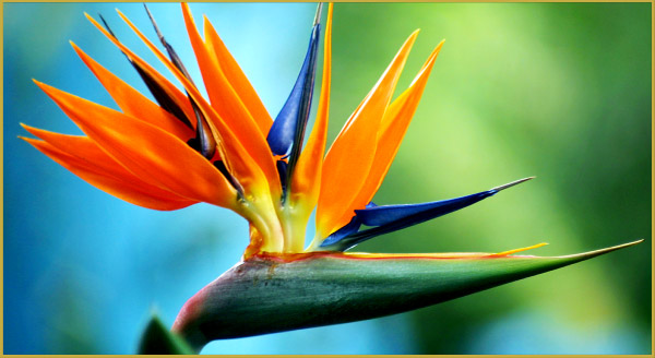 11_flowers
